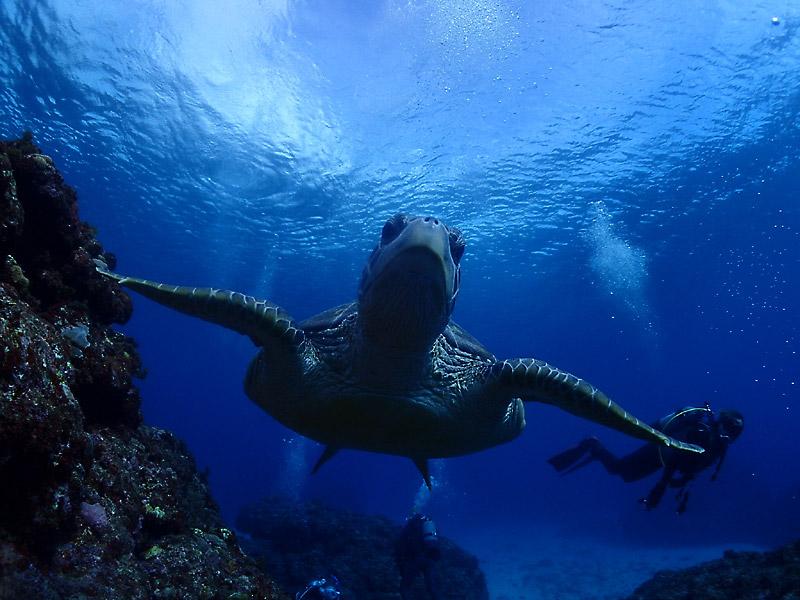 ダイビングの基礎知識
