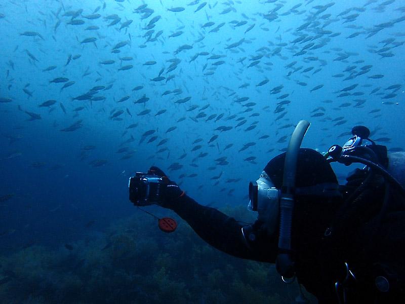 ダイビングで水中写真をきれいに撮るコツ